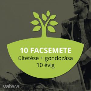 Myforest - közösségi erdő 10 db fa ültetése és gondozása - Vatera.hu Kép