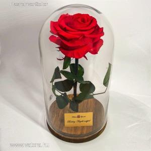 Nagy méretű búrába zárt Örök Rózsa / Forever Rose - Vörös