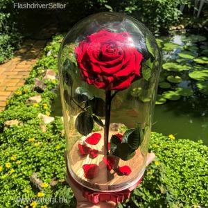 Nagy méretű búrába zárt King Örök Rózsa / Forever Rose - Vörös