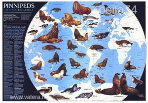 Eredeti térképmelléklet - National Geographic Magazine 1987. Pinnipeds Around the World